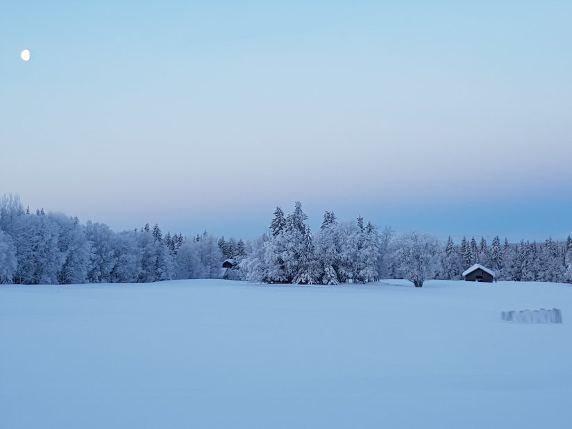 Älskade snö
