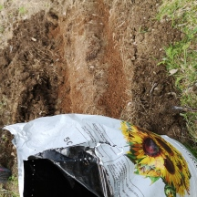 Sparris gillar porös jord så i vår lerjord blendade jag in både sand och torv